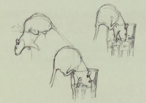 Bleistiftzeichnung Farbratten